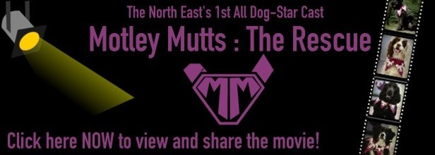 motley mutts banner